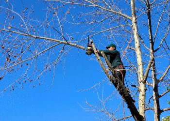 Key Advantages of Employing Qualified Tree Experts – A Basic Guide