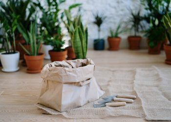 How to Always Keep Your Garden Plants Hydrated and Healthy – Easy Tips