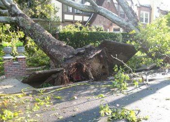 How To Safely Remove A Tree – A Comprehensive Guide To Follow